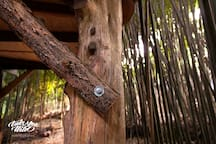 Lindsay Appel's photo of our post and beam treehouse structure