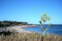 Spiaggia Porto Corallino e pineta  - Villaputzu
