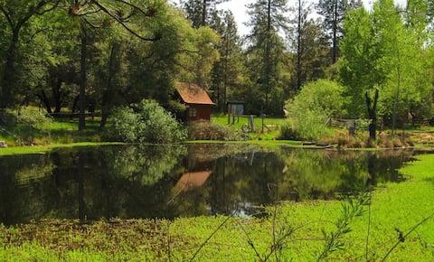 Shangrila above art studio with amazing pond view