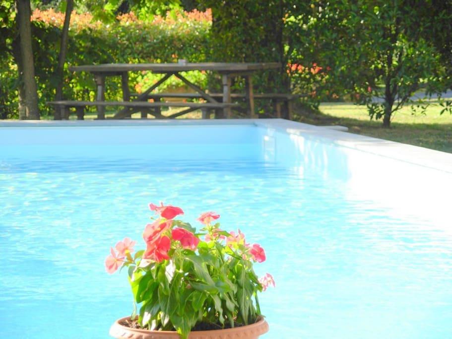Lovely 9 x 4 metre pool in the garden