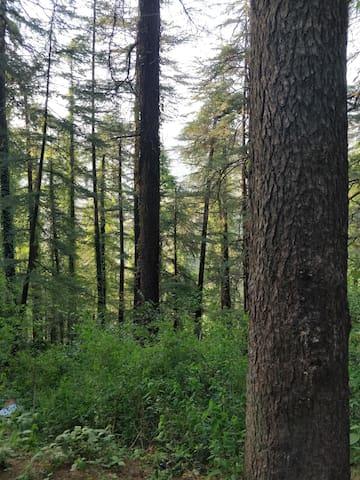 backyard jungle , just 50 metres to property