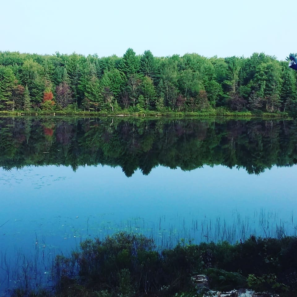 Your quiet, tranquil view every day!  There are only a handful of privately owned cabins on the lake. It's like having your own private resort!