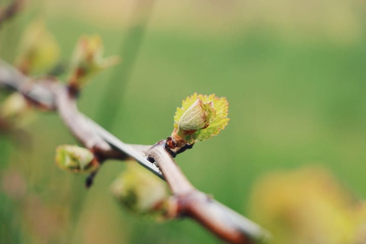 Nestled amongst the vines