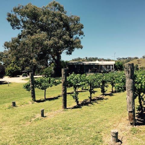 Jessica's Vineyard