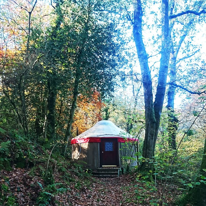 Cosy Double Yurt in a Picturesque Devon Woodland