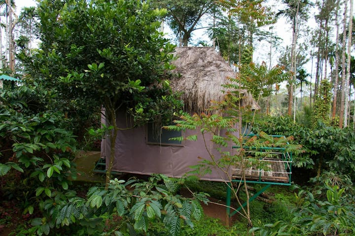 Embrace the nature in Coorg - Bunkers