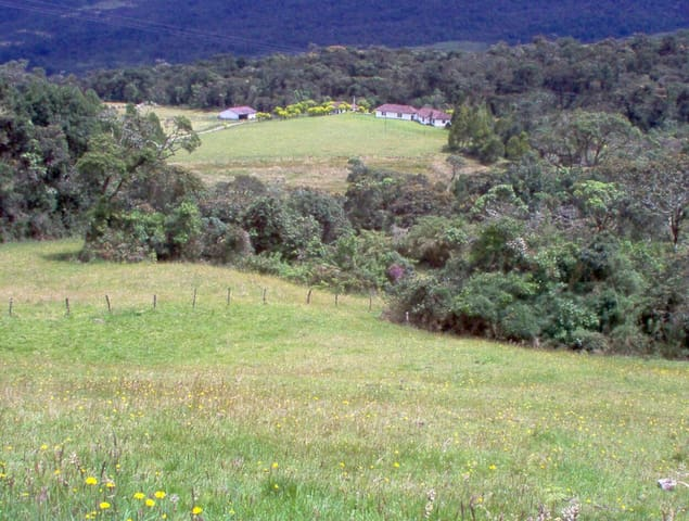 Casa en bosque nativo caminatas - Guasca - Bed & Breakfast