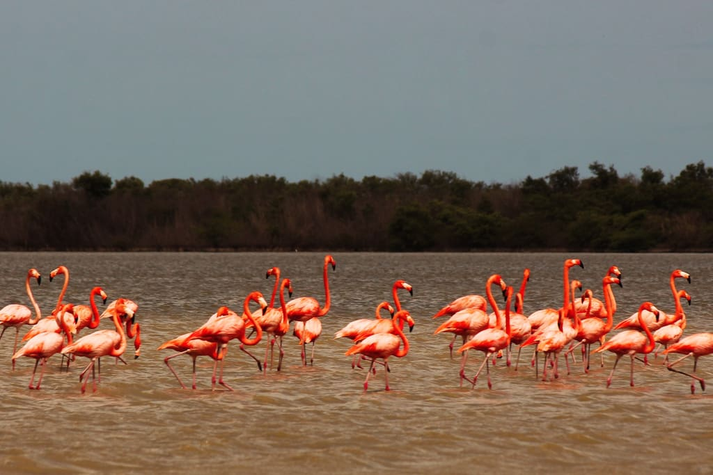 Parque Natural con mas de 126 especies de aves..