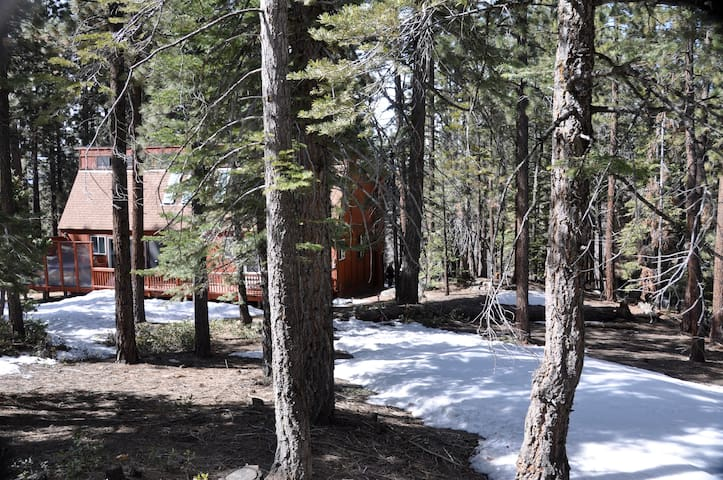 Taken from the back forest area behind cabin looking towards the cabin. Lots of snow play area, and sled hill.