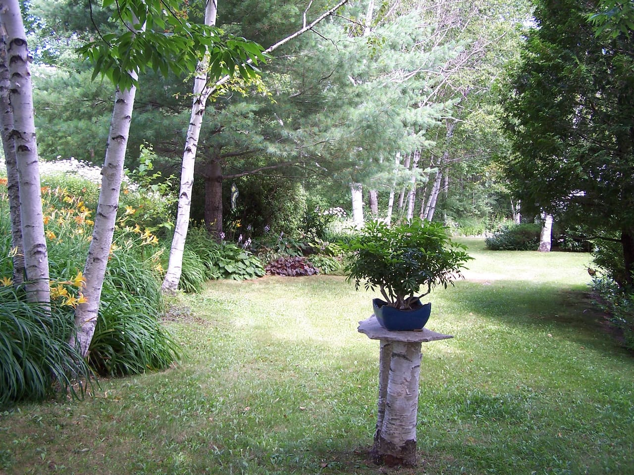 Bonsai and day lilies among the birches