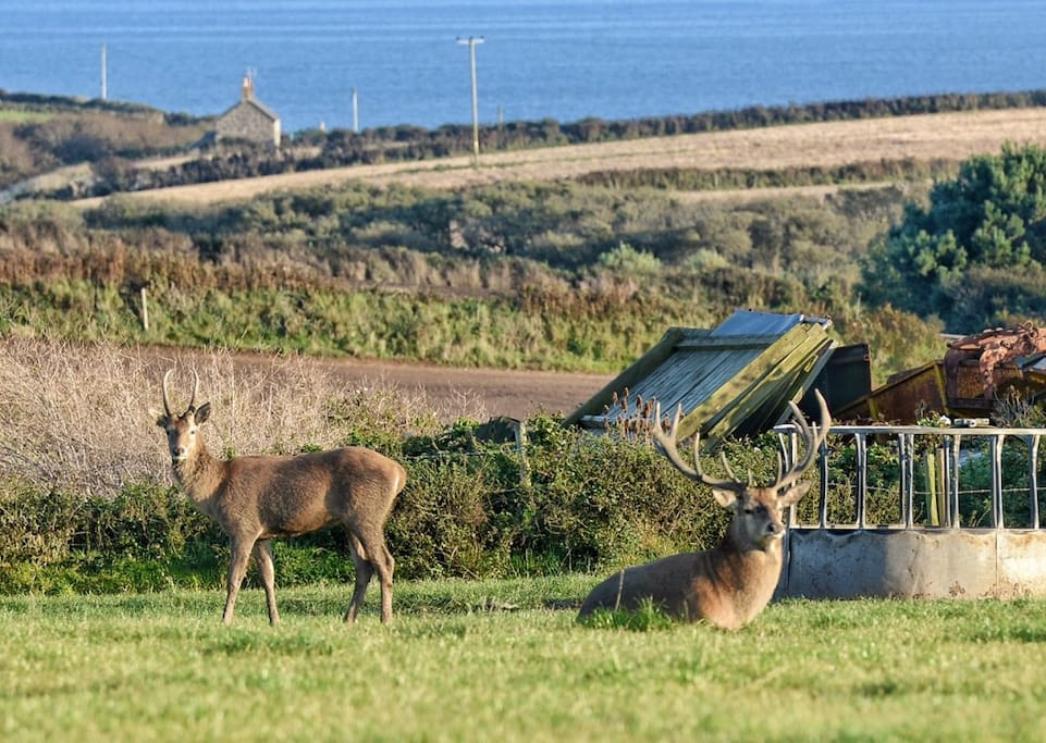 View from the compost loo window last August! (These are wild deer!!)
