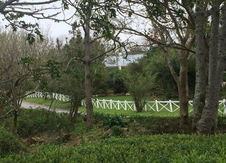 The Lemon Tree, Belvidere Estate