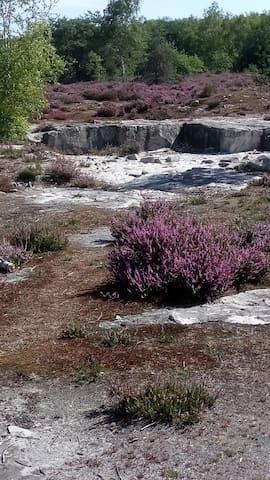 Randonnée en Forêt parmi les Rochers,dans le Sable.