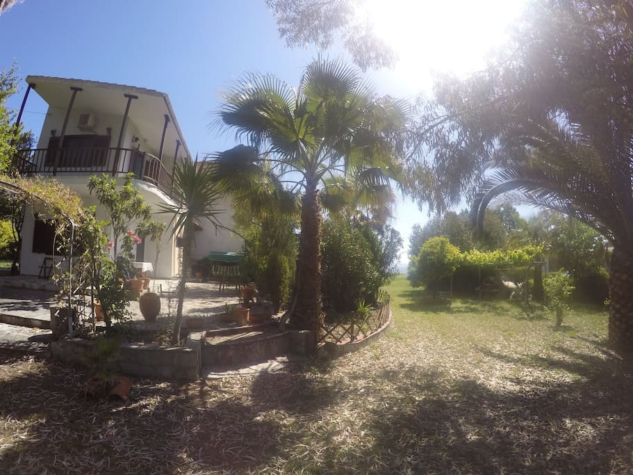 Cottage house by the sea!olive trees and beautiful trees and palms around the garden
