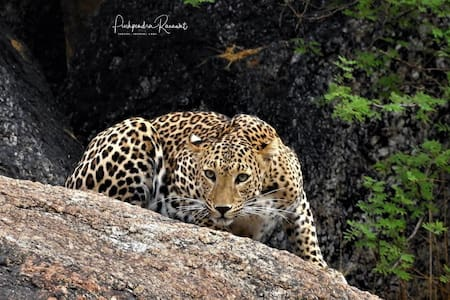 Explore the wildlife beauty near Jawai Dam