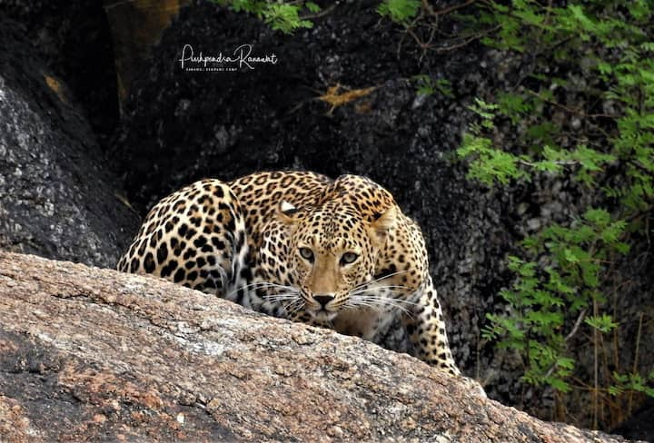 Discover the unseen treasures of wildlife in Jawai
