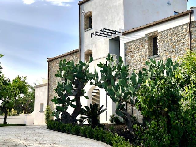 Oikos in Terre di Zaccanello - Nocellara Deluxe