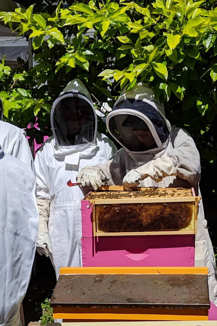 Opening the hives.