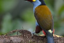 View toucans from a hide