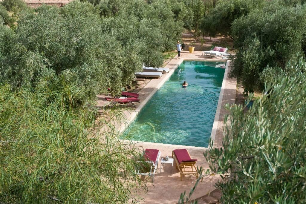 La piscine de 20 m x 4 est à l'abri derrière une barrière