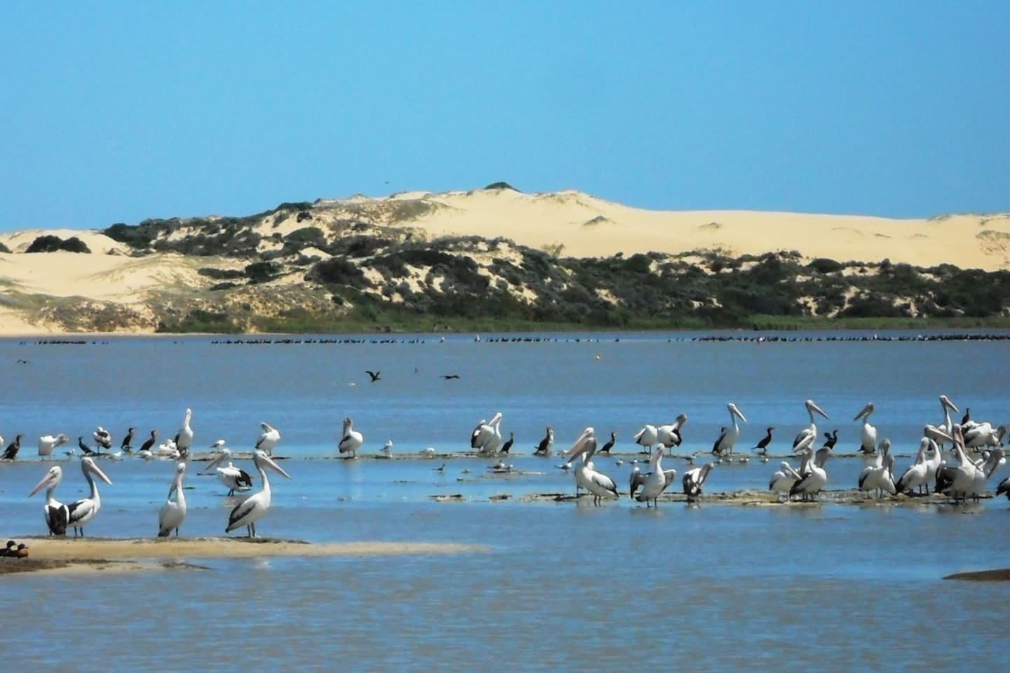 The beautiful Coorong sand dunes and birdlife