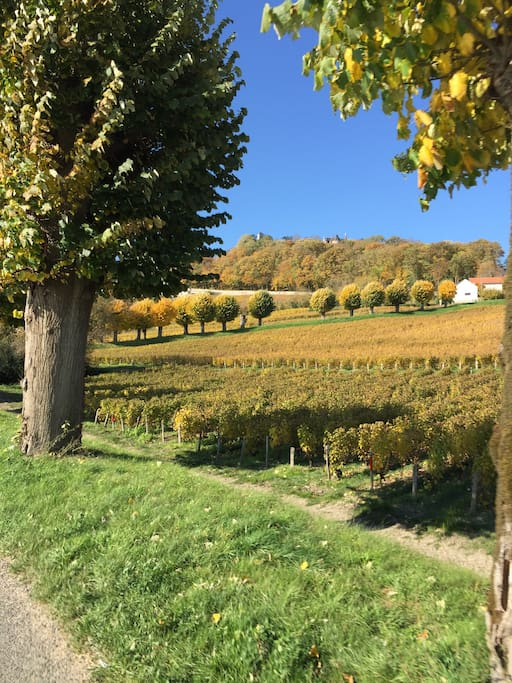 Pouilly sur Loire town has over 100 wineries including delicious Pouilly Fume which can be enjoyed any season.