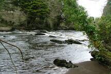 Salmon & Trout fishing - River Bonnet
