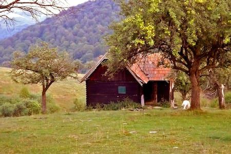 • COZO FANTU • log cabin Carpathian Mountains - Fântânele