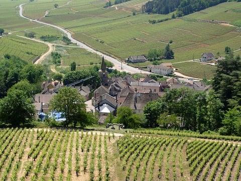 Wśród winorośli Beaunoises