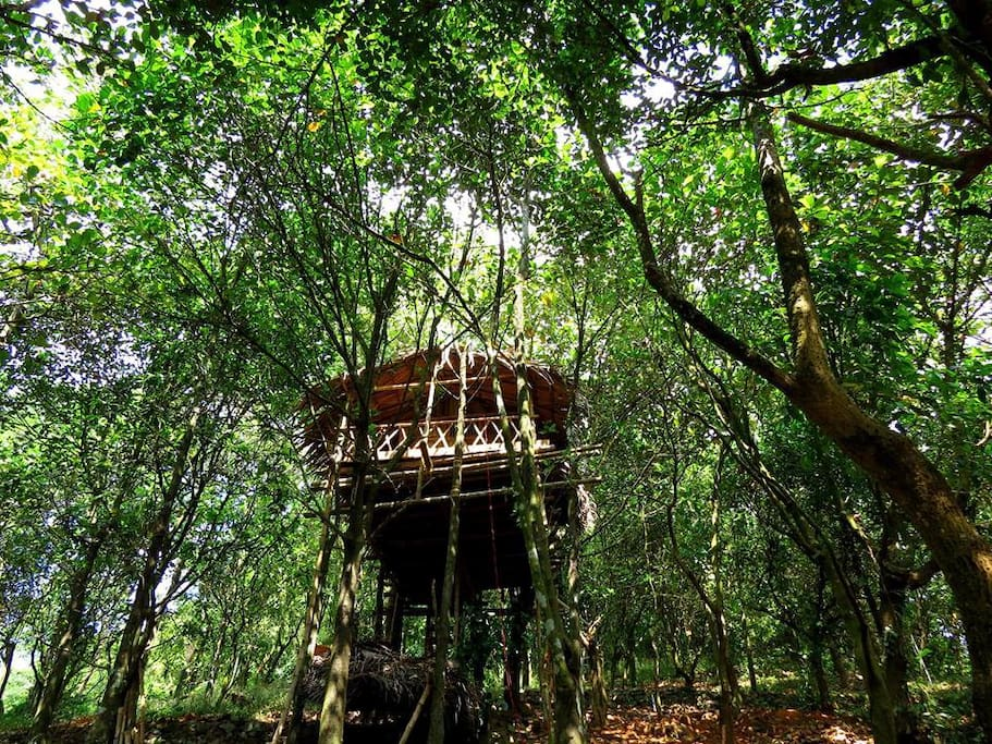 The Tree House is located in the Paithalmala Hillstation in the midst of abundant nature