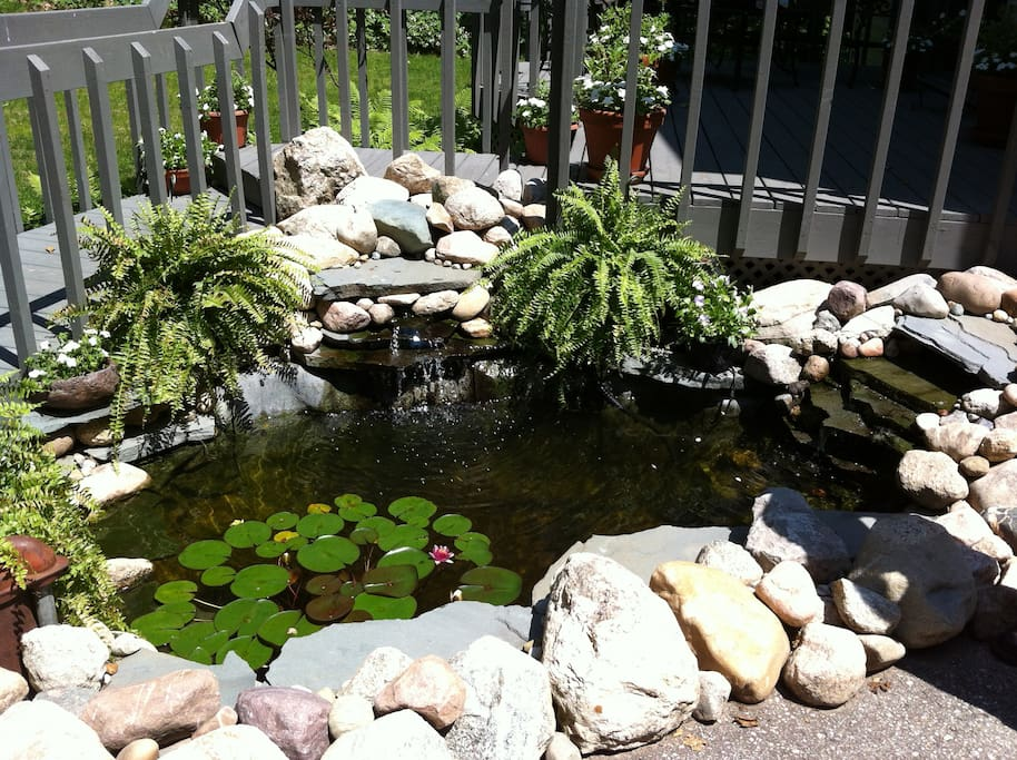 Deep goldfish pond located between driveway and deck in front of the house