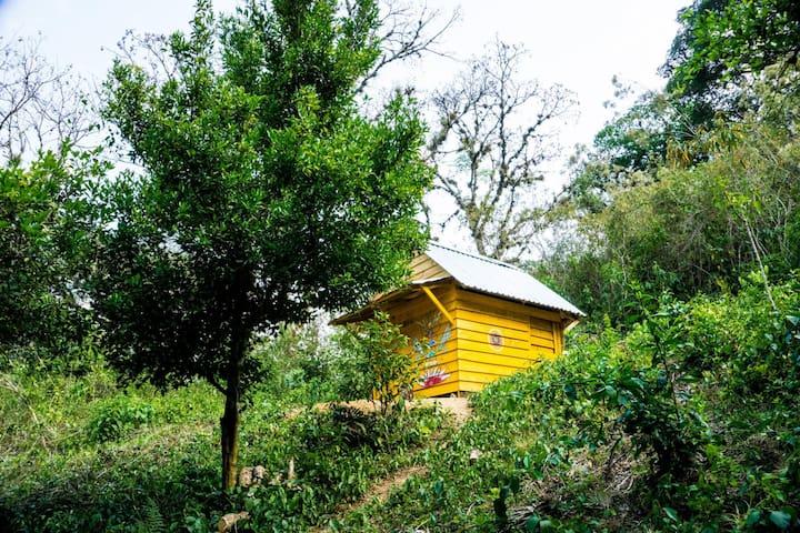 Bosque Shambala, holistic healing community