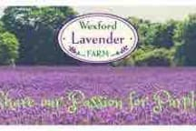 Lavender farm - 5min drive