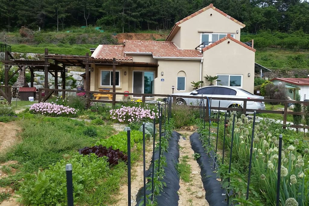 YK happy house 전경. 1층 주인집이고 2층이 개인실입니다 정원의 채소는 바베큐시 상추 깻잎 등 따드셔도 됩니다. 재배 가능한 철에 만. 7~8월에는 깻잎. 오크라. 풋고추 가능.