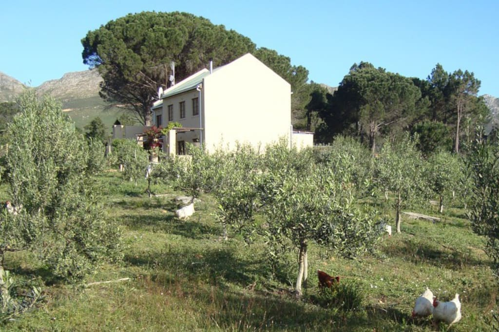 view of the house from the organic olive orchard