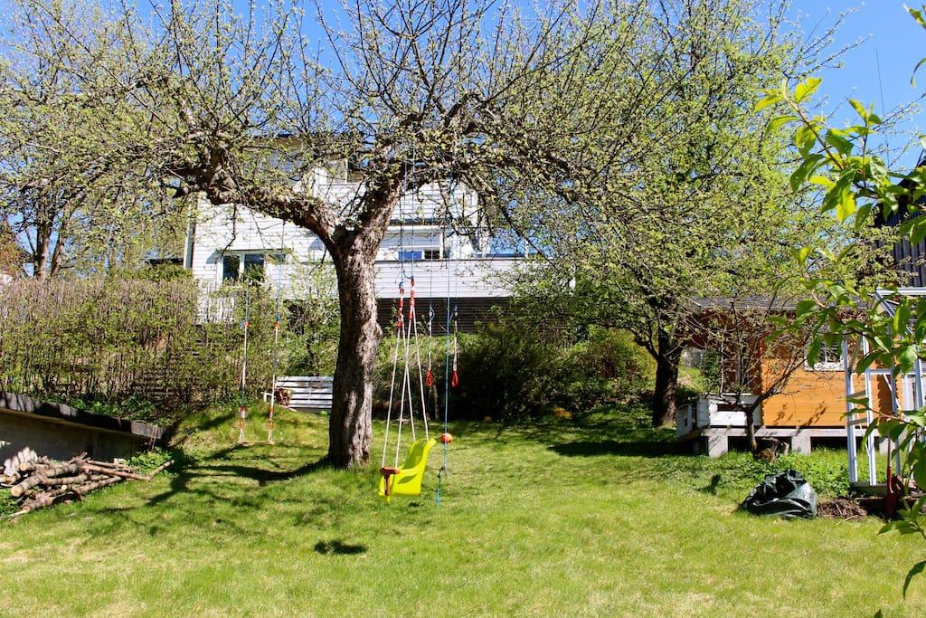 Big garden with fruit trees