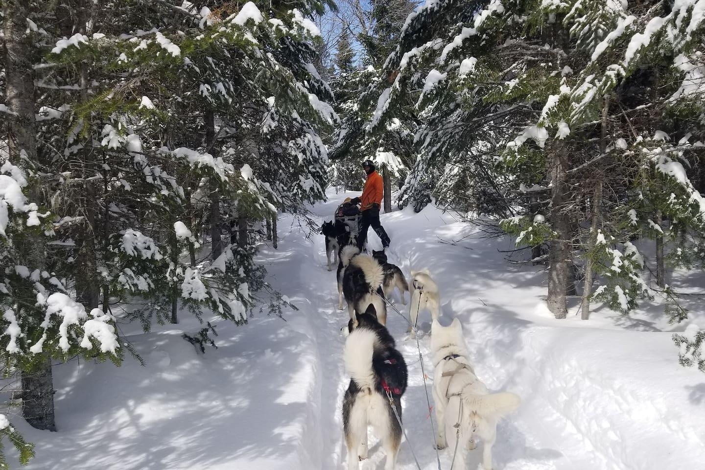 Nous offrons des randonnées en traîneau en saison hivernale. Avec nos Huskys , nos amours...
