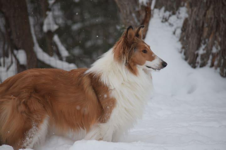 Hamish, Our Canine Ambassador