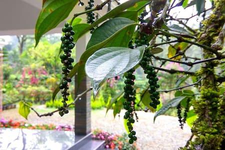 Flower Valley Homestay, Munnar - Munnar - Rumah