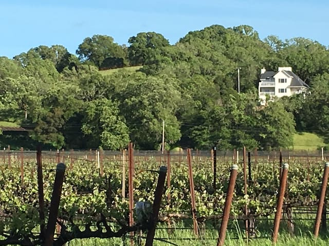 Gorgeous Vineyard Views Behind Campovida  Winery