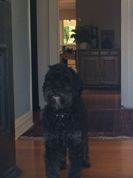 Welcome from Harry the Labradoodle!