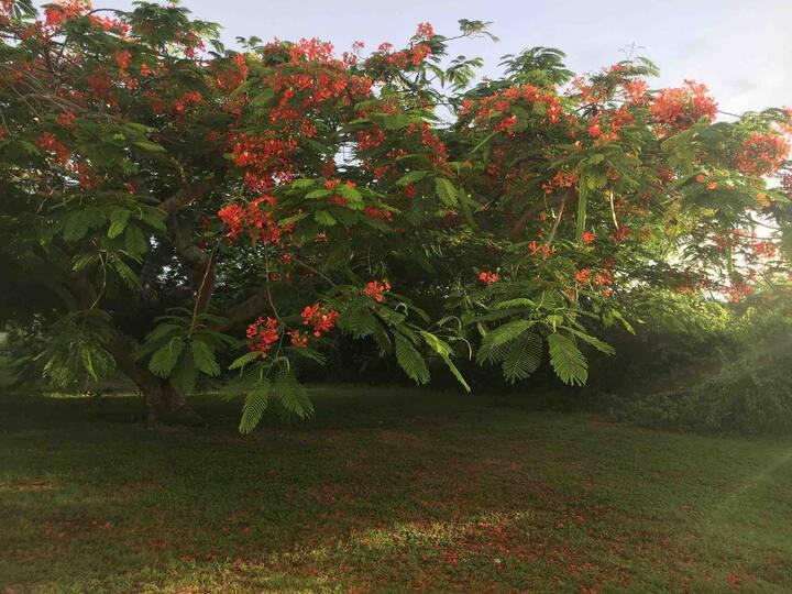 Acacia Tree Beautiful Camping Space