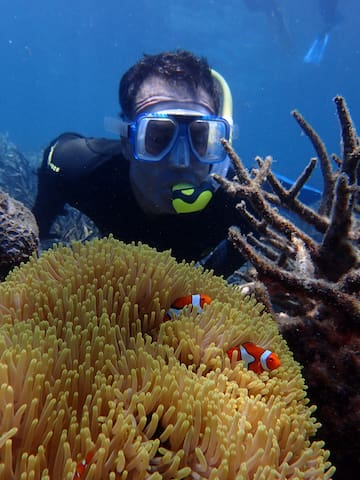 Brian saying hello to the clown fish. When out with Wavelength Reef Cruises