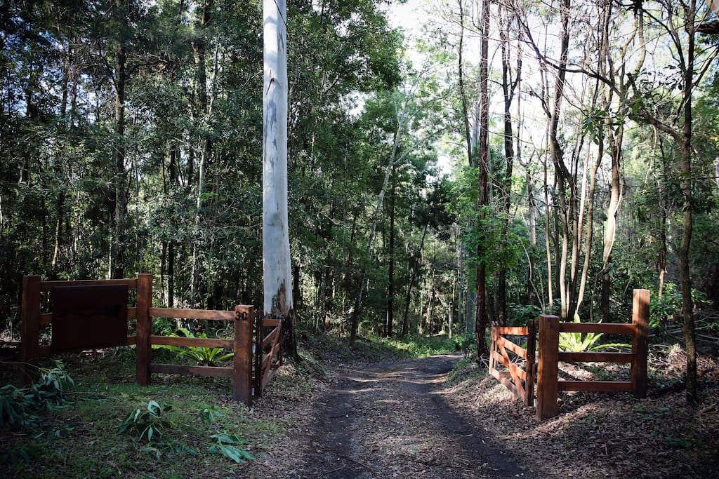 Forested driveway