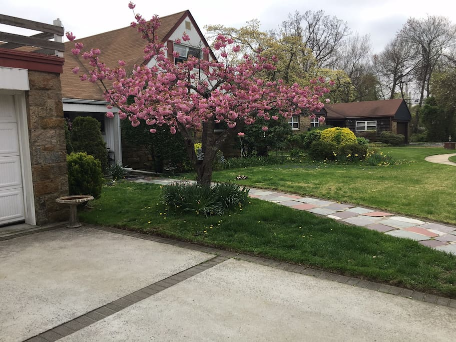 Blooming Cherry, Dogwood, flowers, outdoor nooks & indoor chill spots.