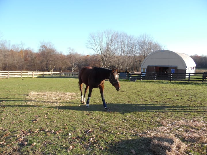 Horse Farm Bedroom# 2