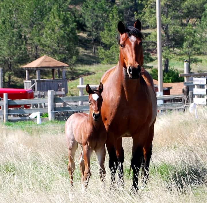 Horse Lovers Bunkhouse 2,  'Head Wrangler Cabin'