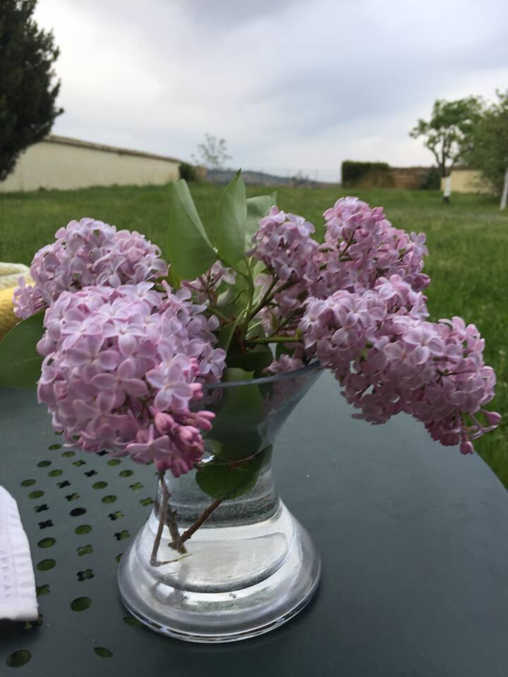1 chambre-maison au coeur des vignes du Beaujolais