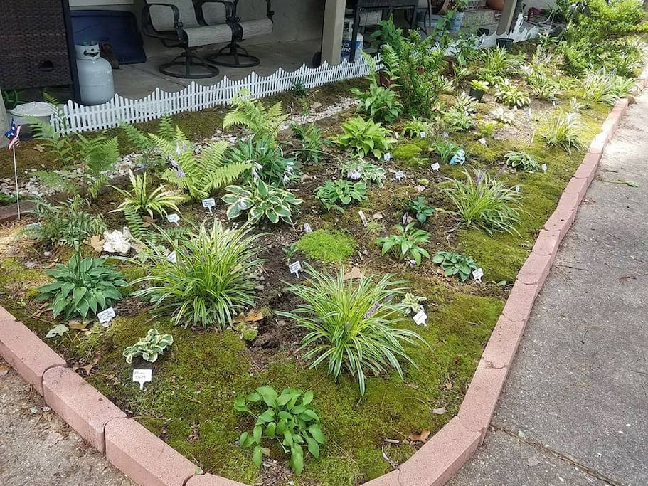 Hosta and moss garden welcomes visitors to the home. Various varieties are labeled for your learning pleasure. Divisions can be purchased if specific-plants can sustain the loss. Nearly 100 varieties can be seen between the front and back garden areas.