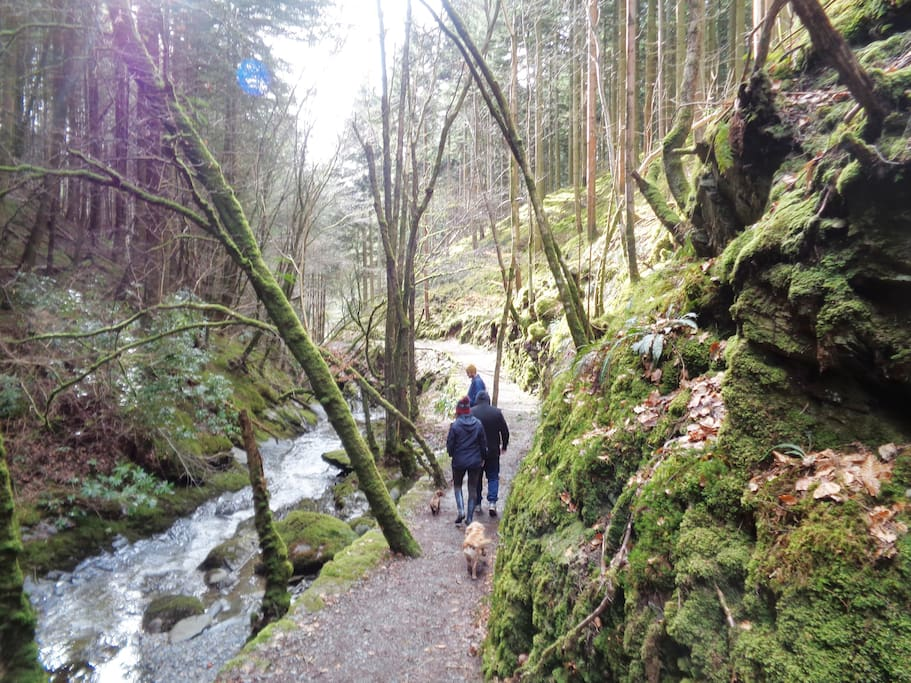 Wilderness at your doorstep, with town convenience - pic is nearby historic Hafod estate with various walks to suit everyone